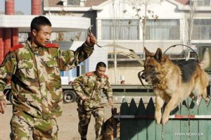 China-train-MWD